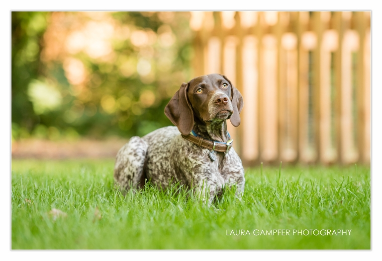 kane-county-pet-photographer