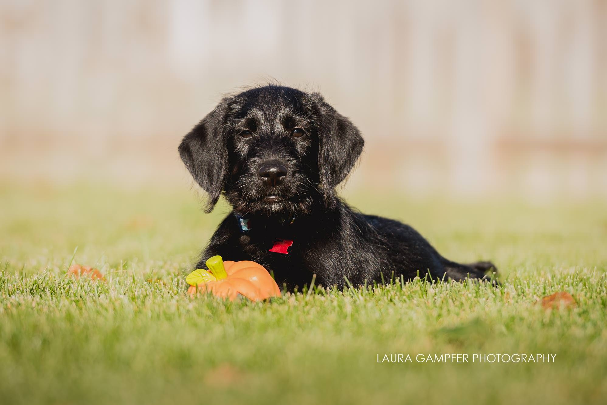 dog-photography-geneva-il