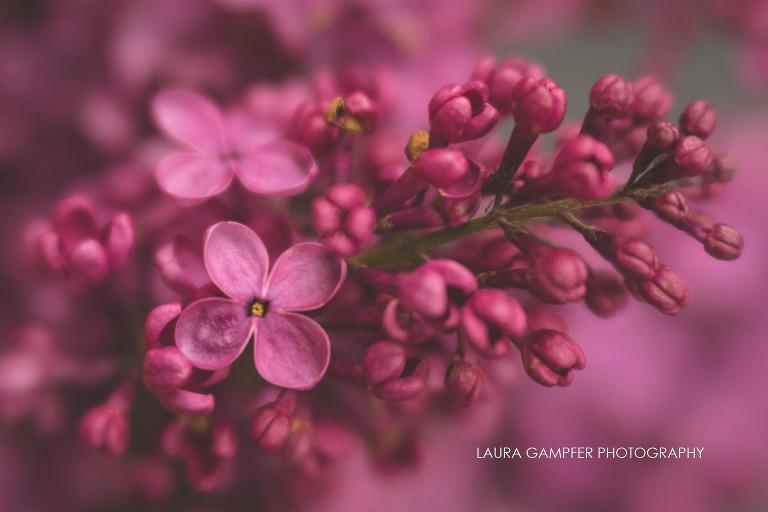 flower-photography-chicago-illinois