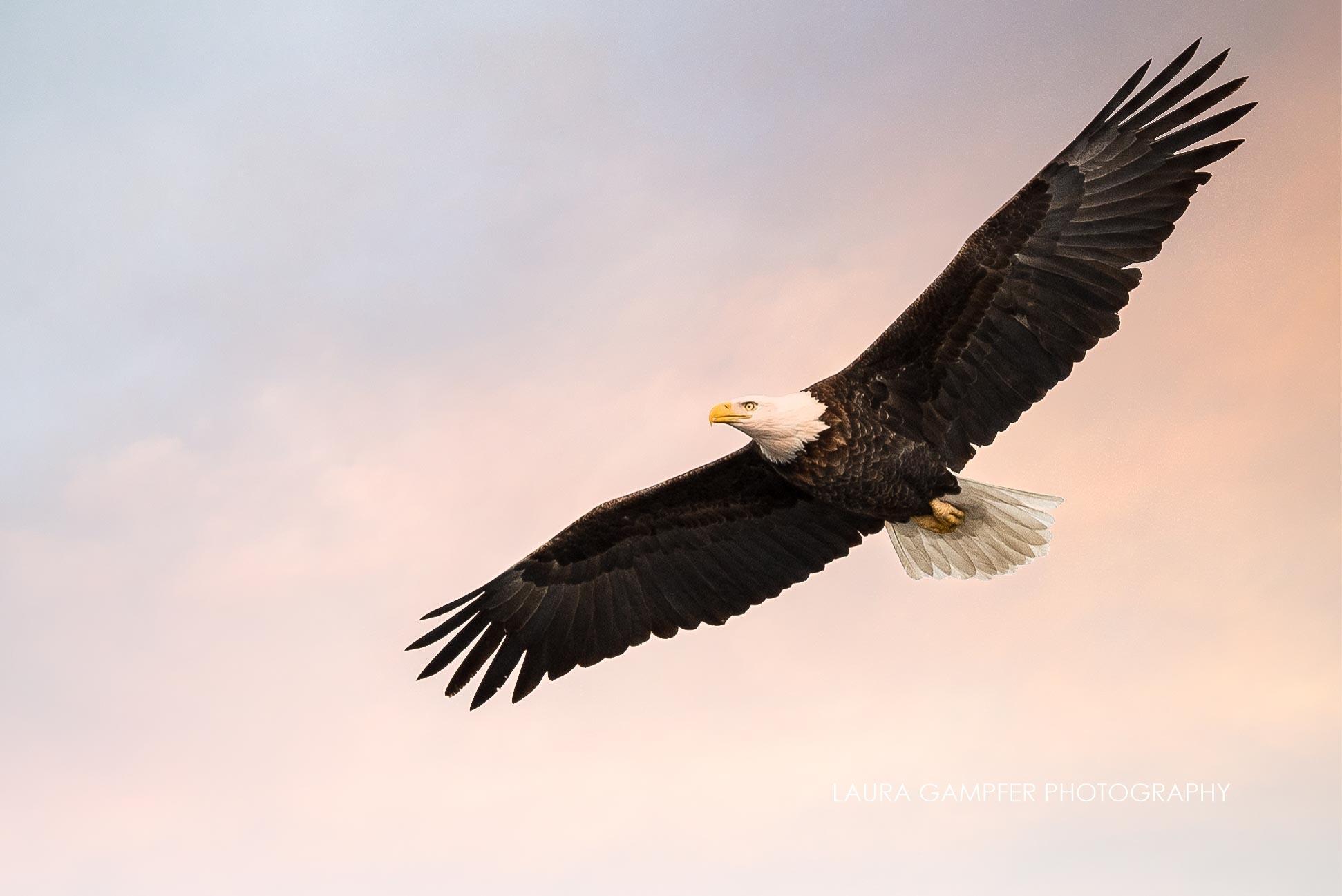 eagle kane county - elburn il photographer