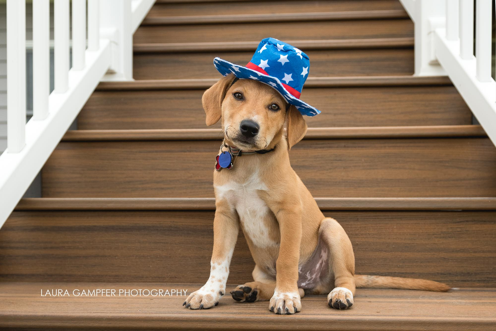 pet-photography-kane-county-dupage-county-il