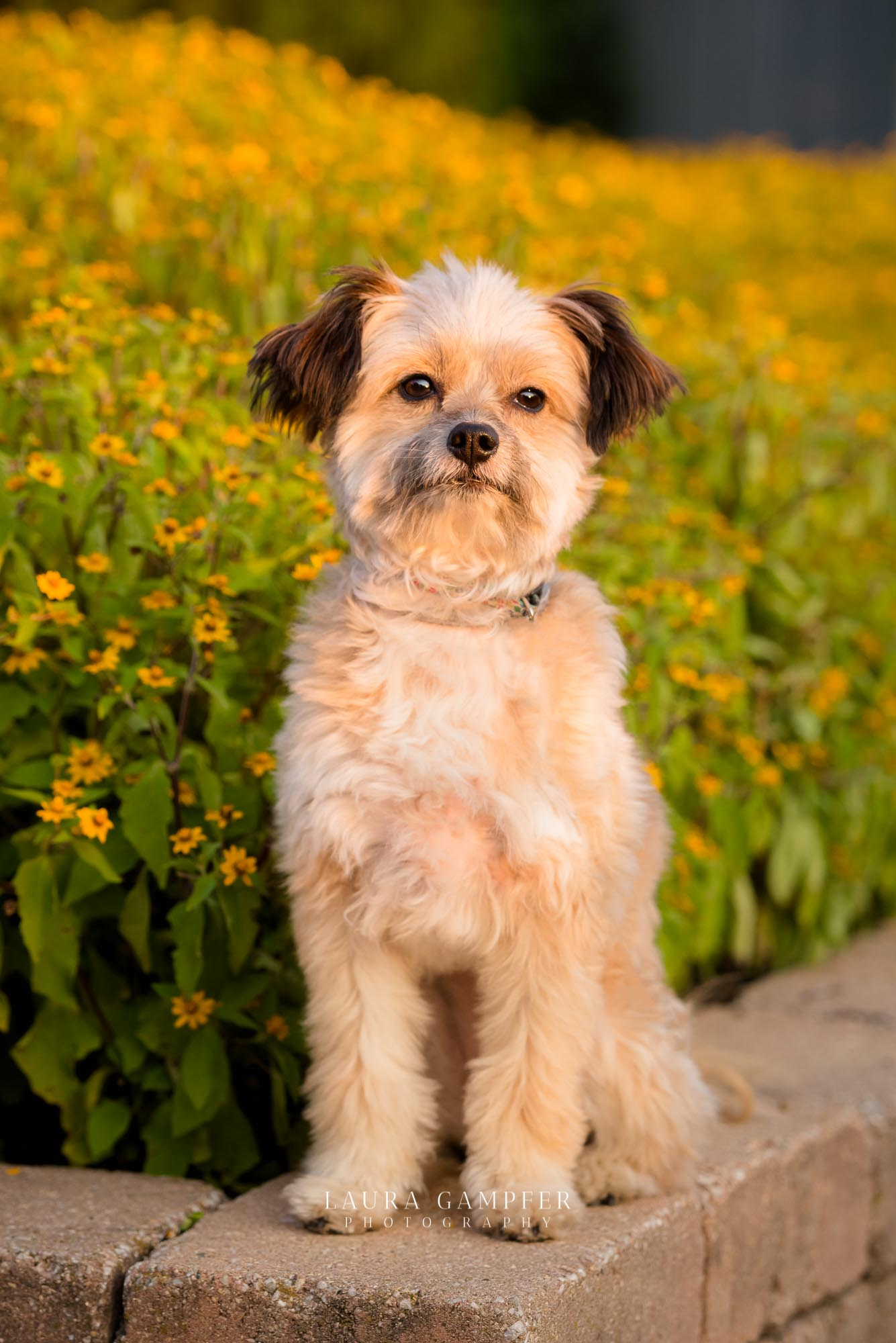 pet-photography-elburn-il