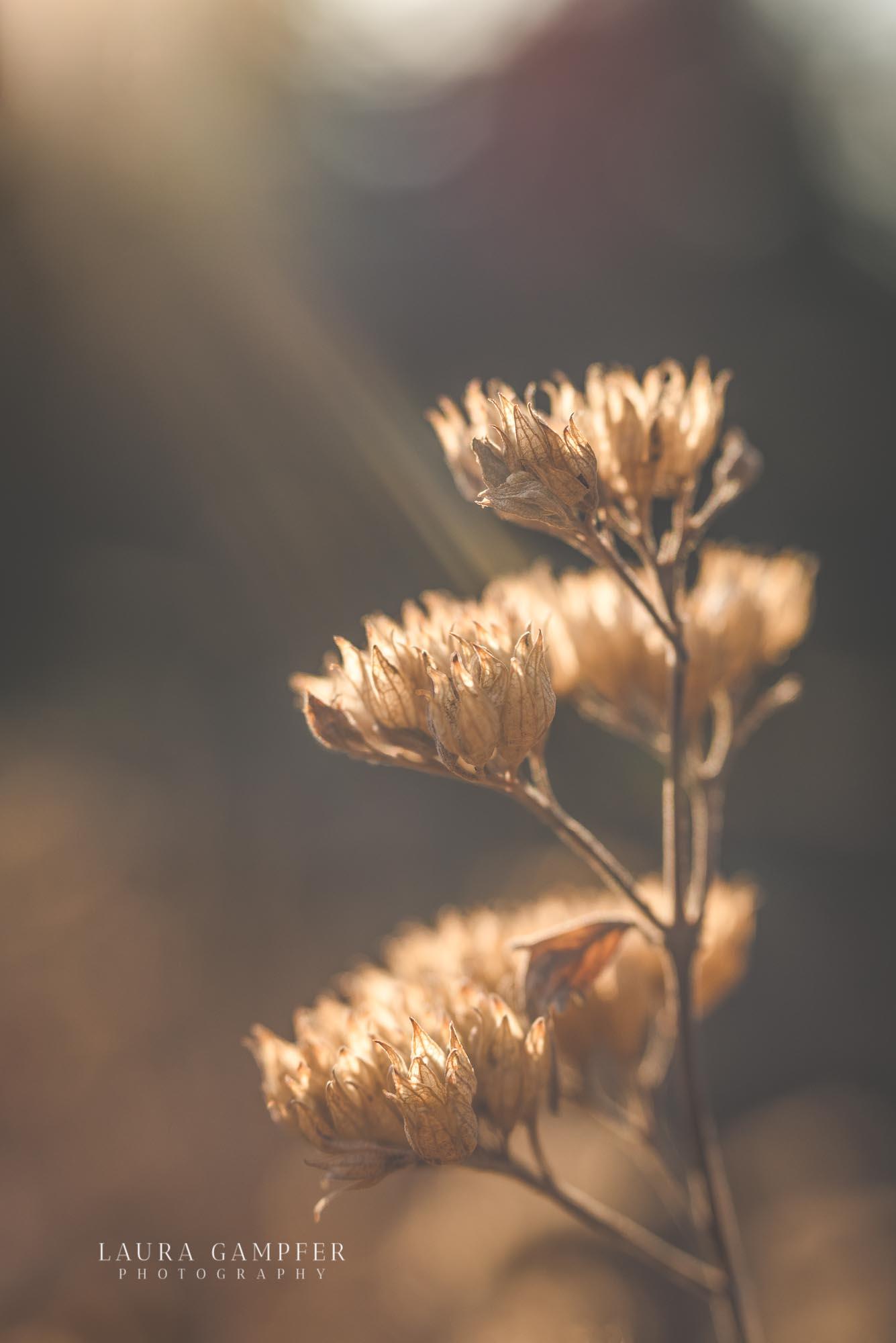 northern-illinois-flower-photographer