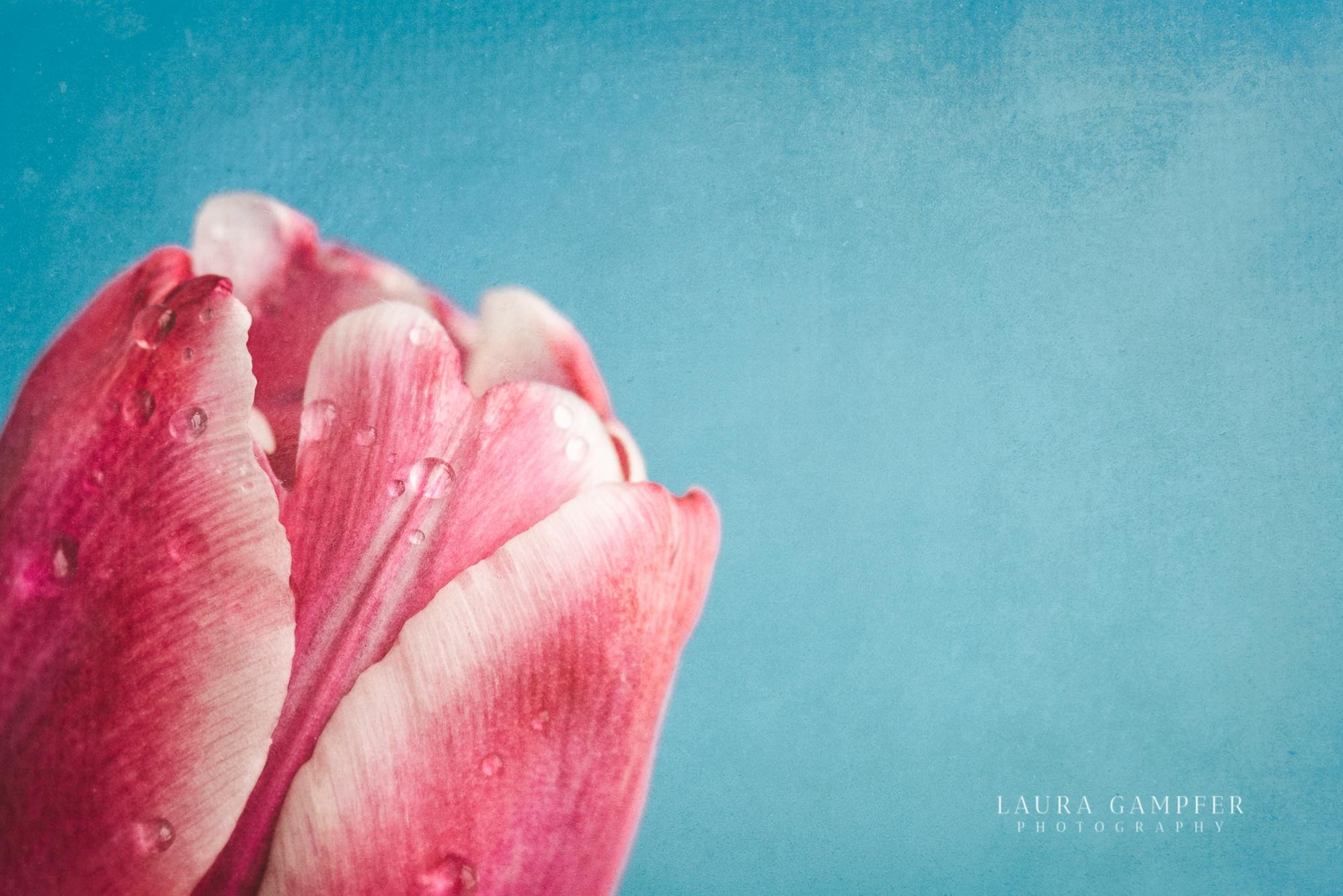chicago-flower-photographer