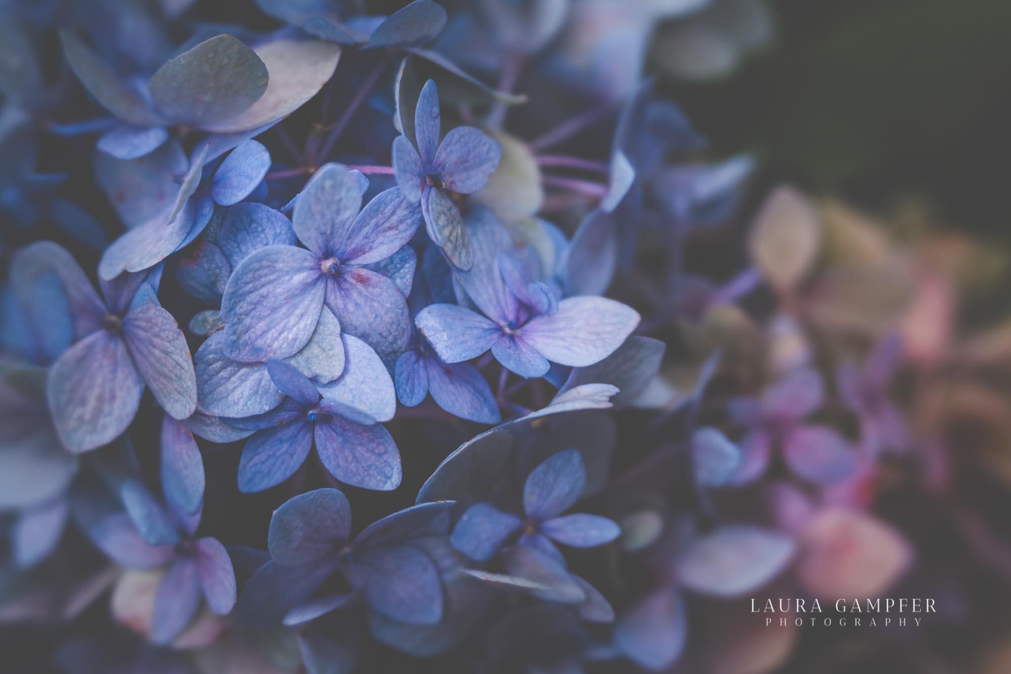 northern-illinois-flower-garden-photographer