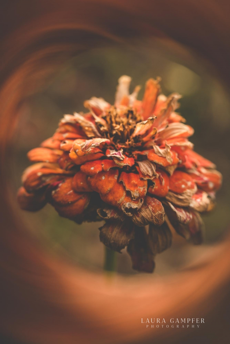 kane-county-il-flower-garden-photographer
