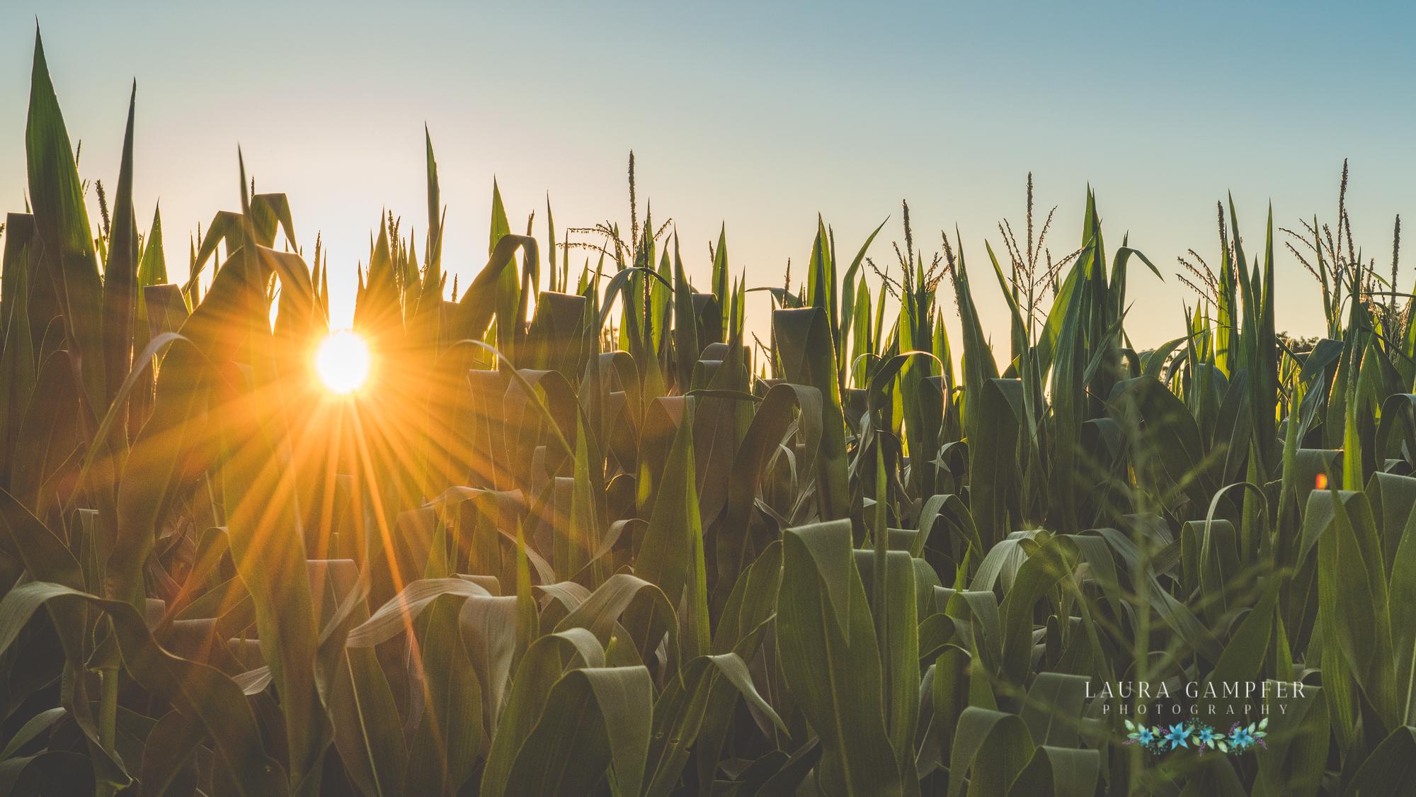 kane-county-il-farms