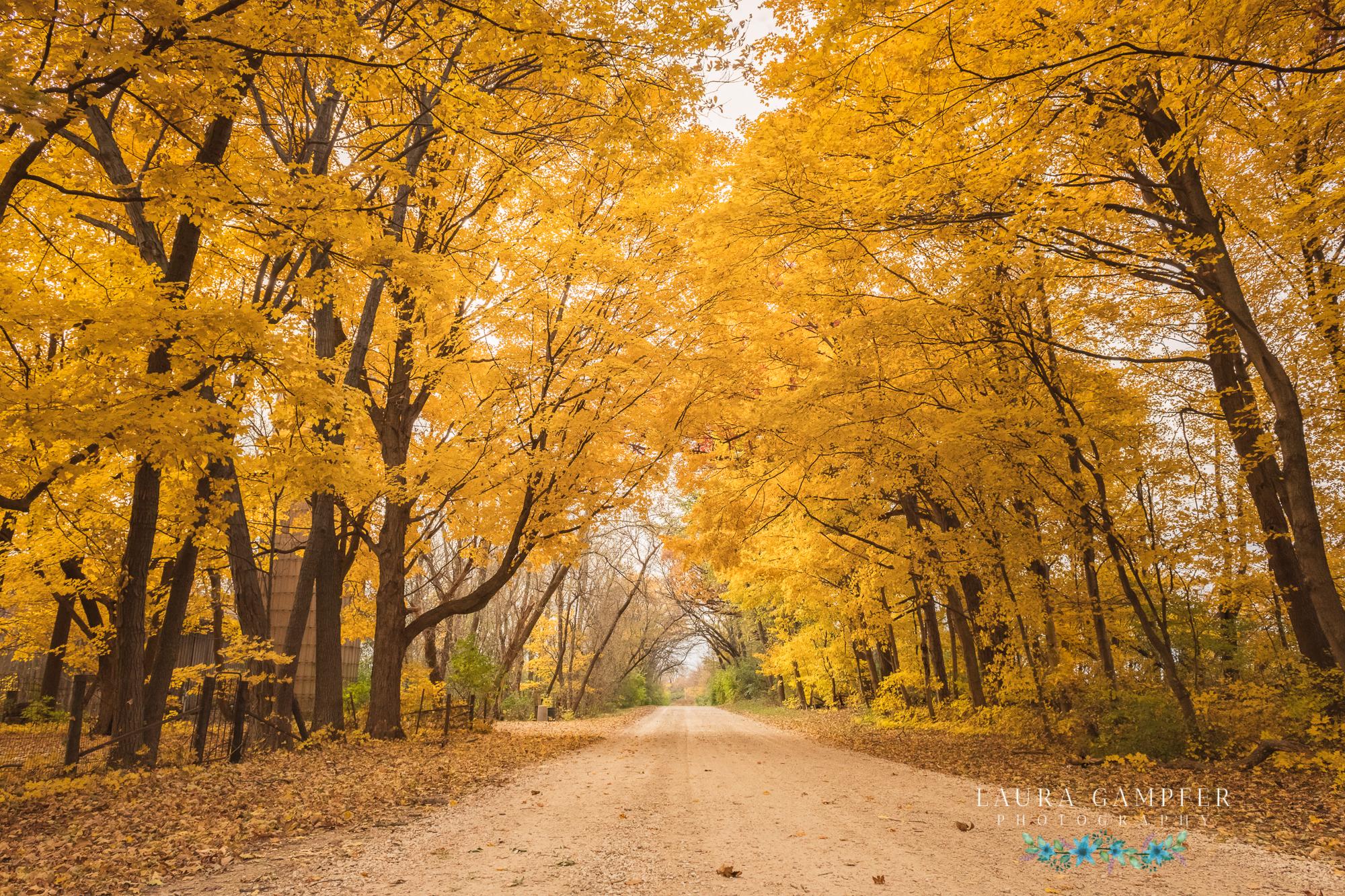 kane county rustic road, elburn illinois, laura gampfer photography