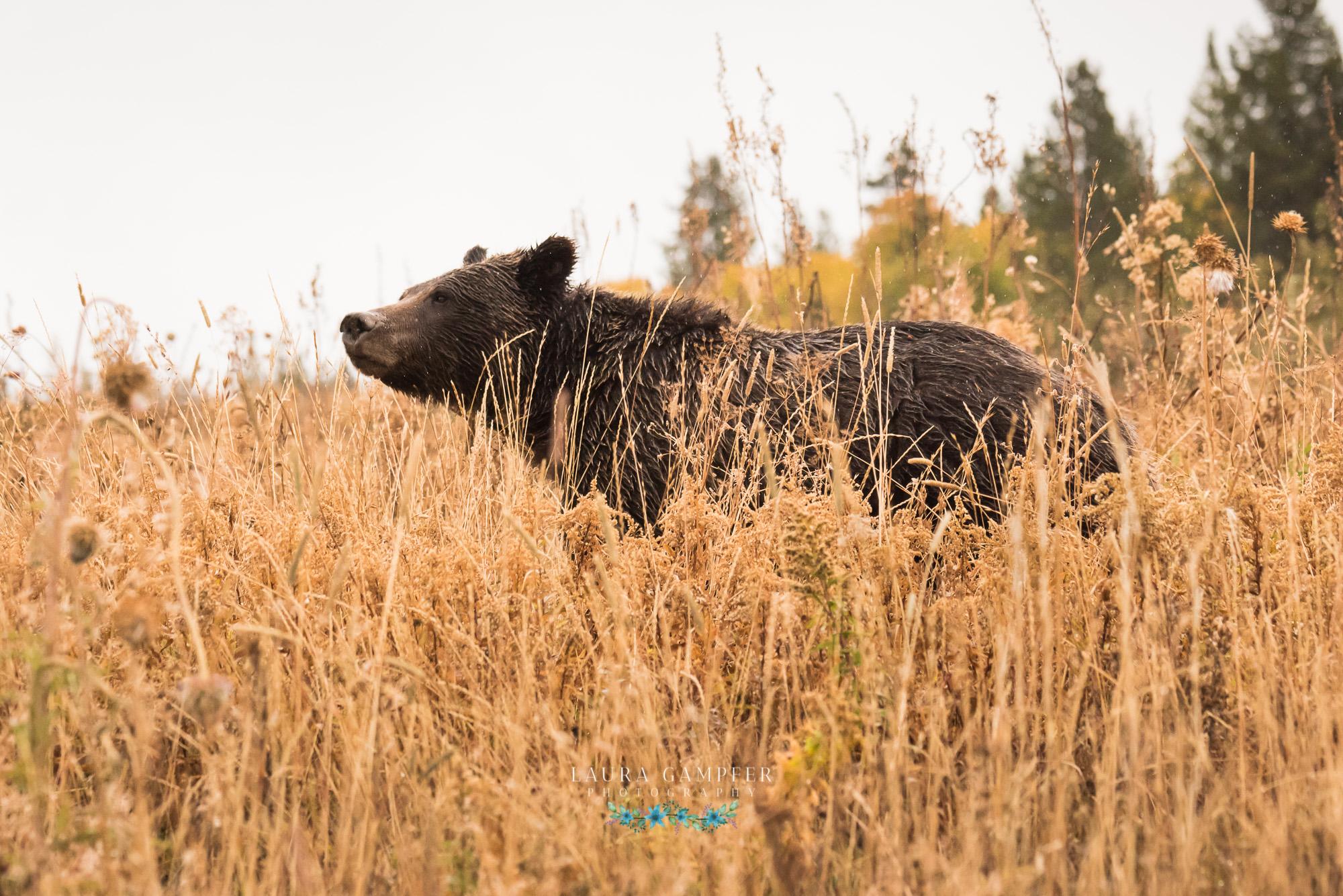 grand-teton-national-park-photography