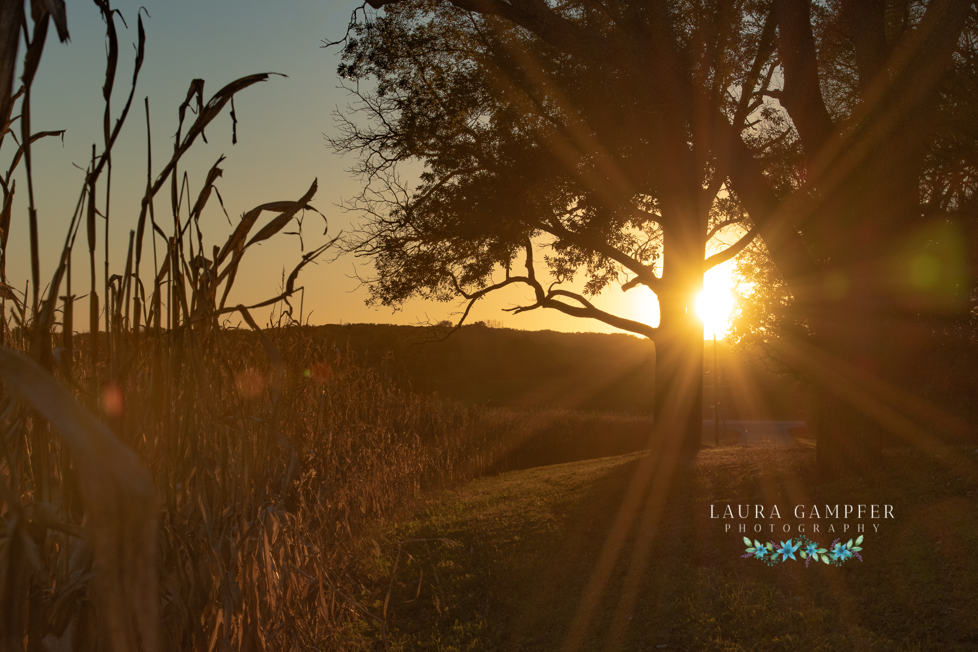 elburn, illinois sunset, Laura Gampfer Photography