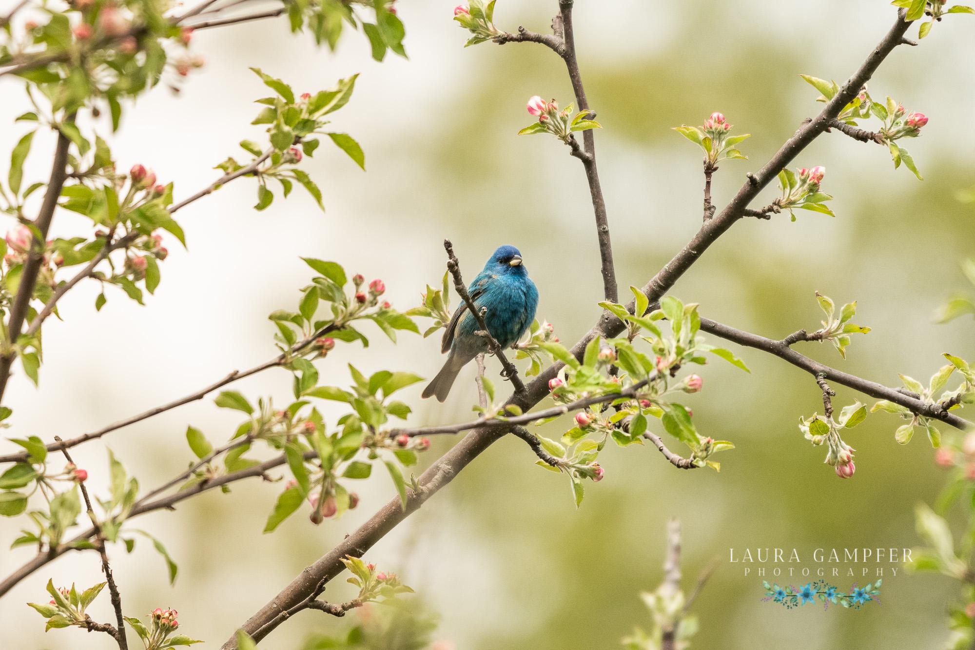 illinois bird photographer