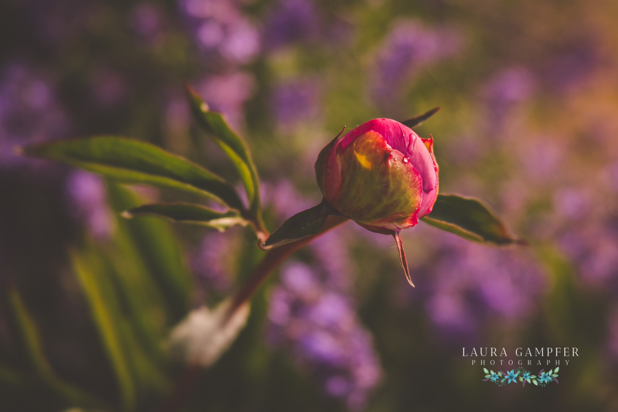 floral photography laura gampfer