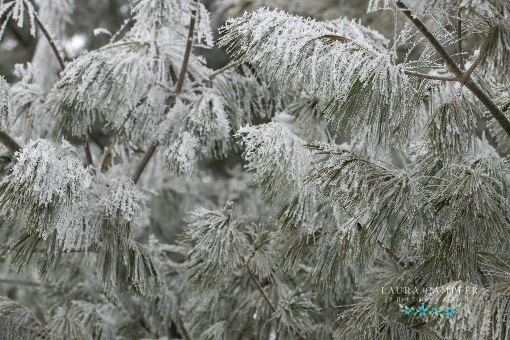 rime ice Illinois