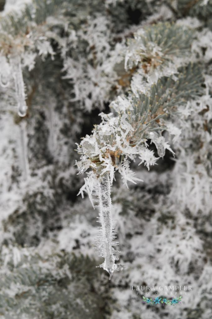 winter icicles northern Illinois