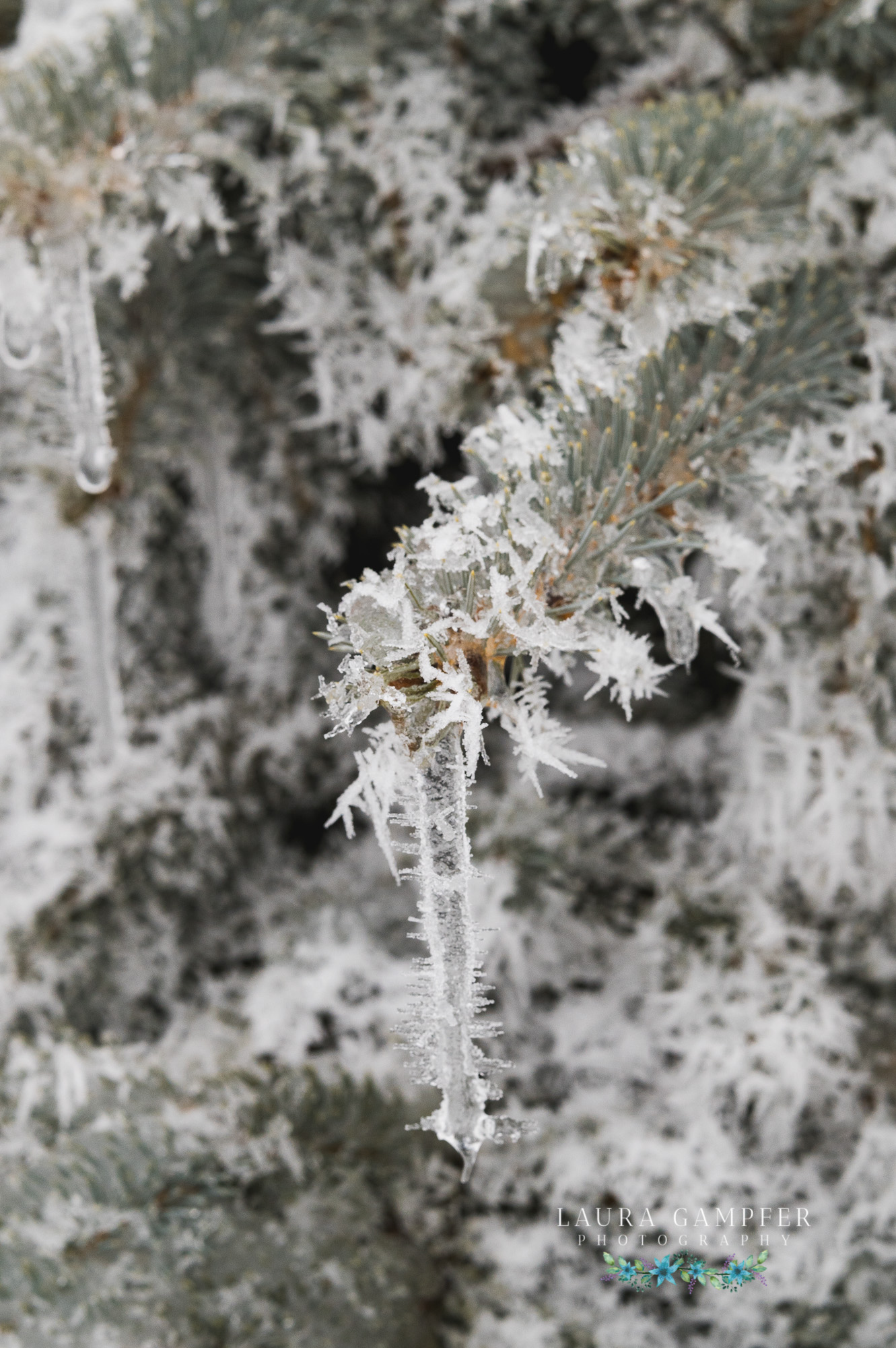 winter icicles with hoarfrost photos