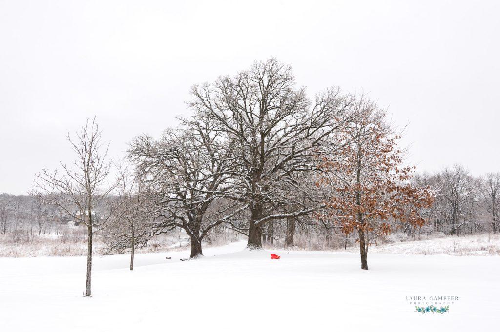 winter photos St. Charles IL