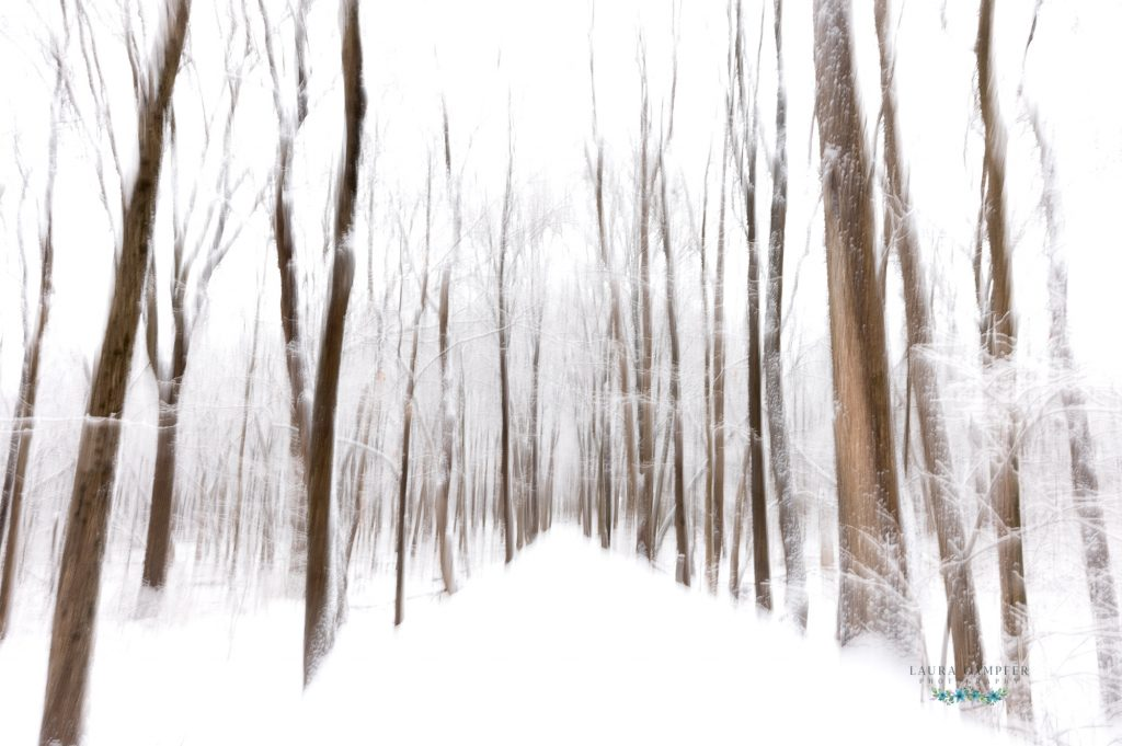 abstract winter woods photos