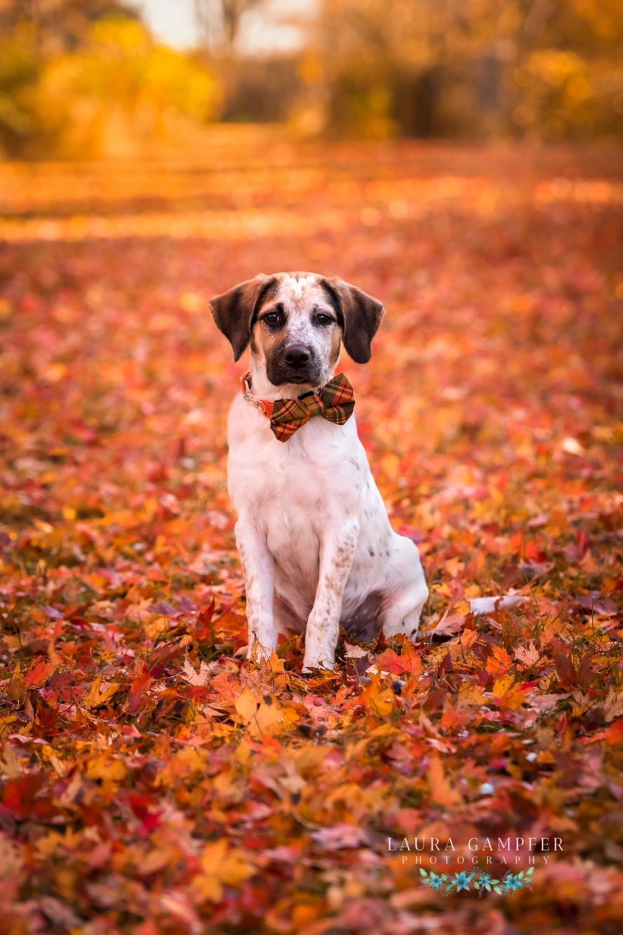 dog-photographer-kane-county-illinois