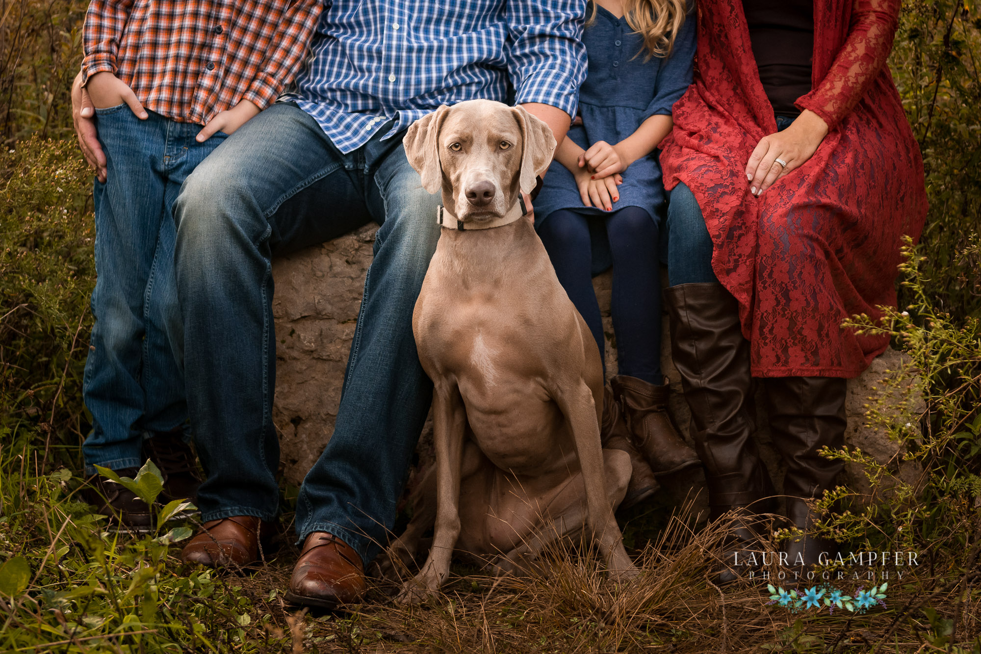 pet and dog photography elburn sugar grove il