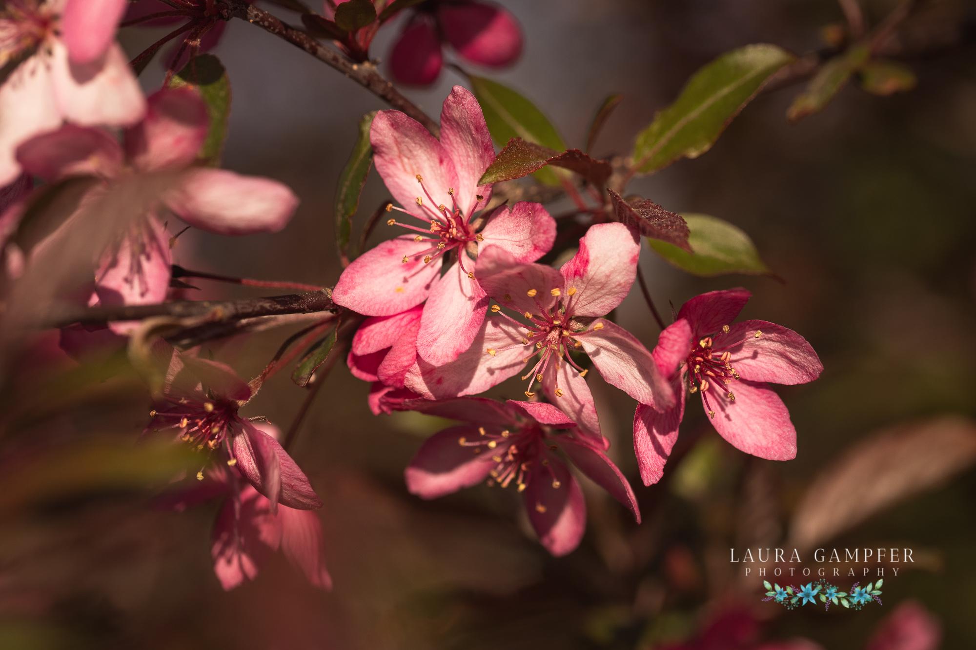 illinois midwest garden photographer