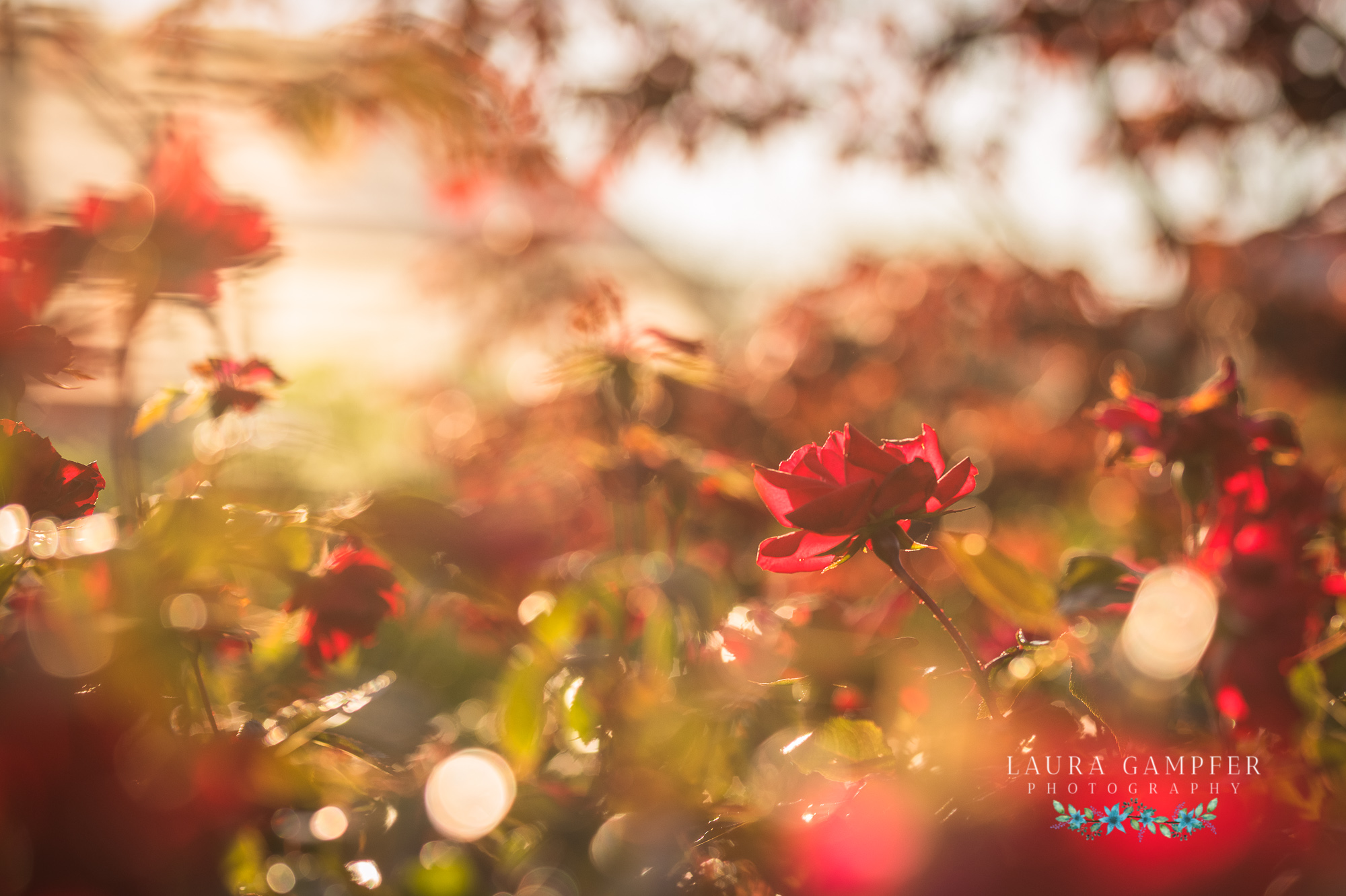 flower and garden photography illinois