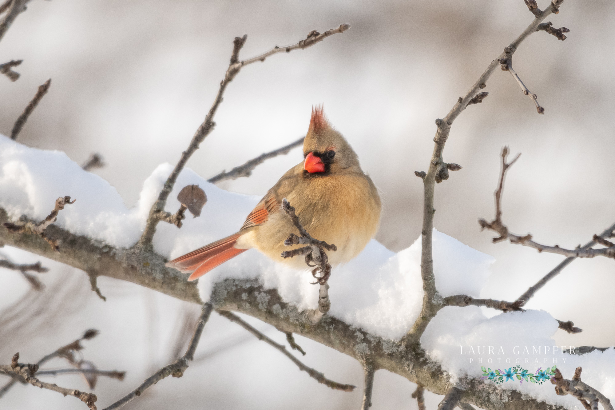 kane county il wildlife photography