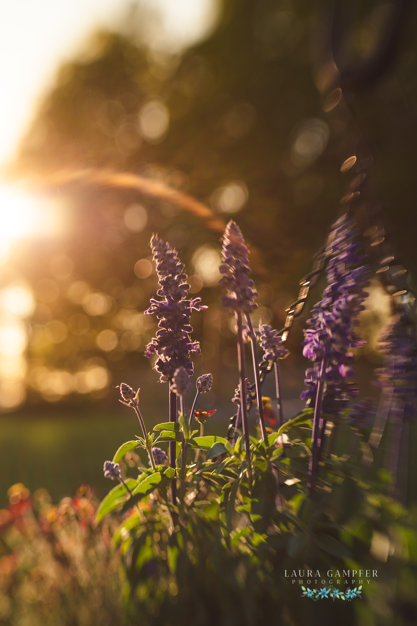 illinois flower photography
