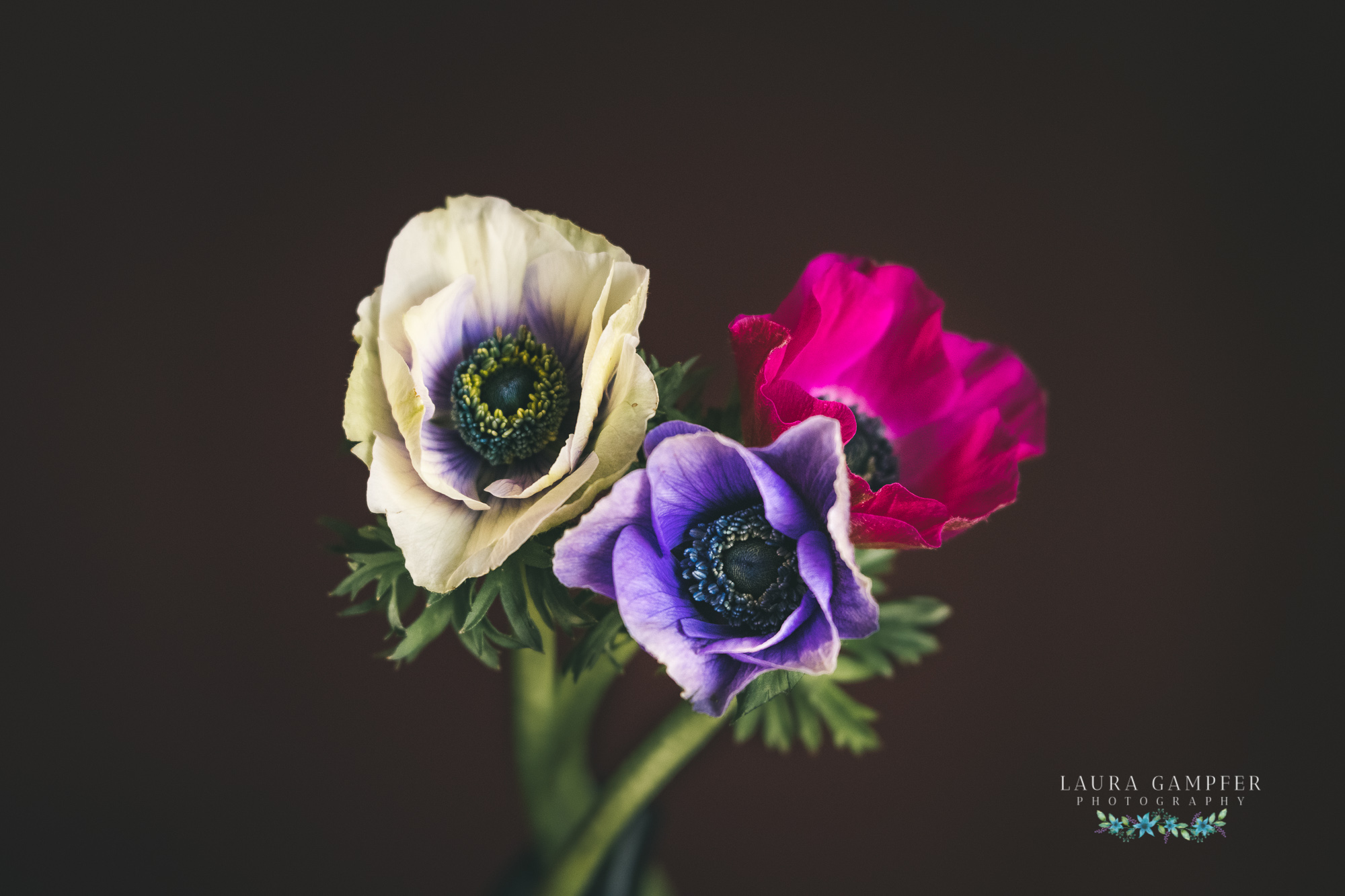 illinois flower photography anemones Laura Gampfer
