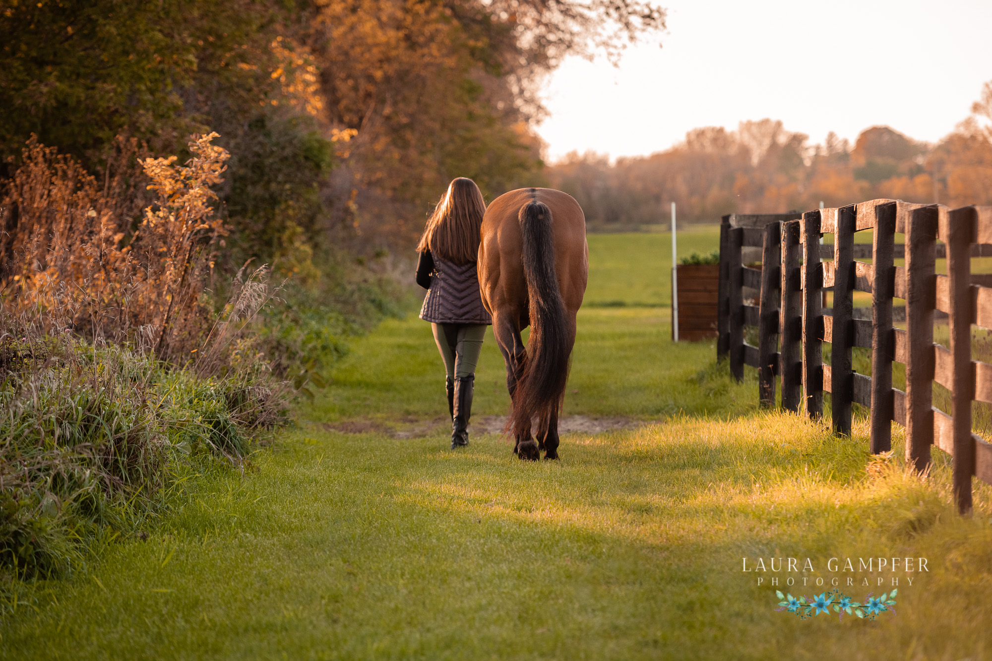 equine-photography-illinois