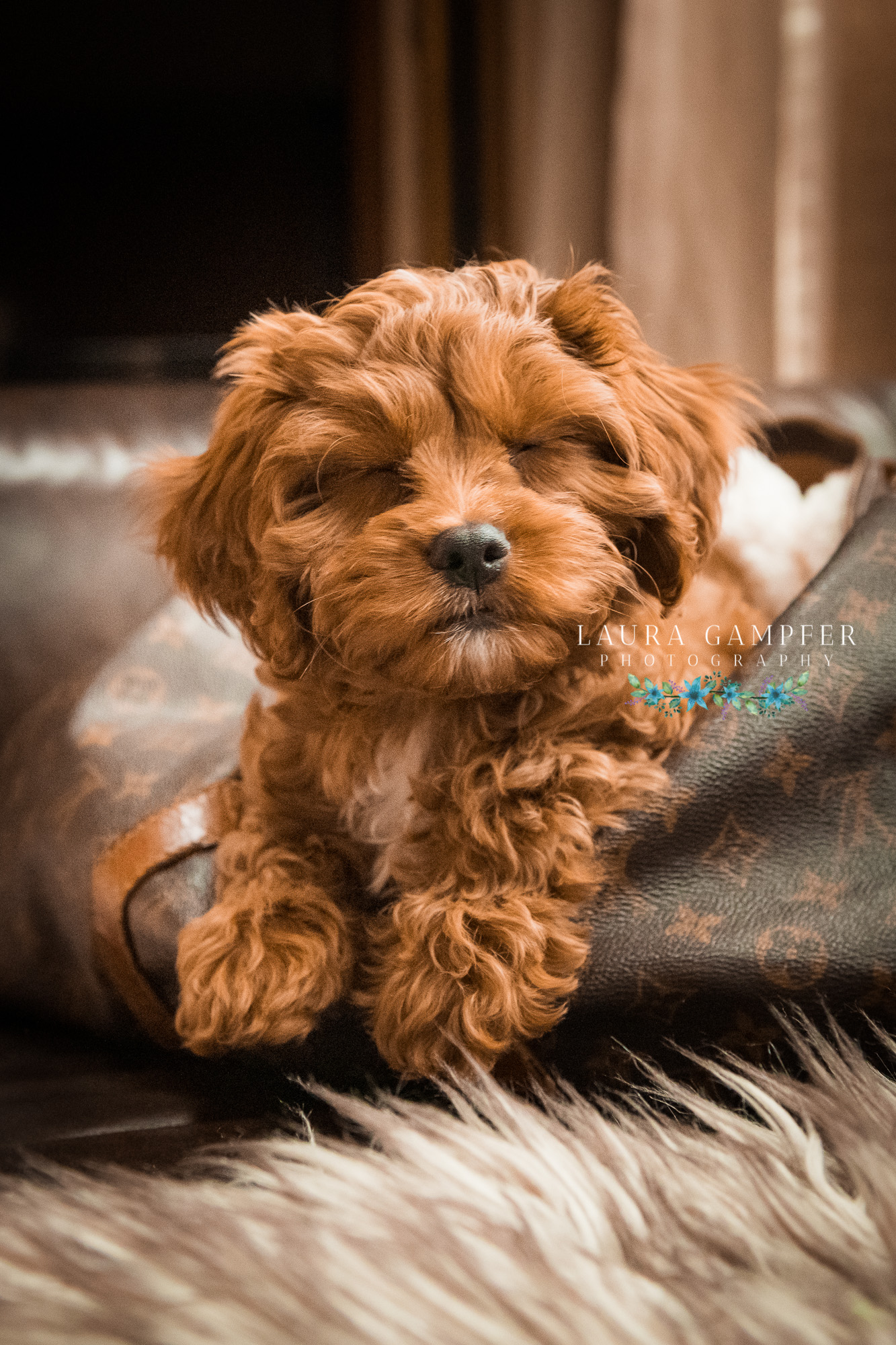 pet-photographer-kane-county-illinois-laura-gampfer-photography