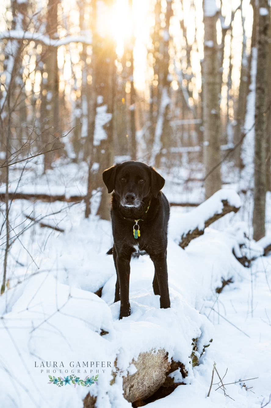 sugar-grove-illinois-dog-photography
