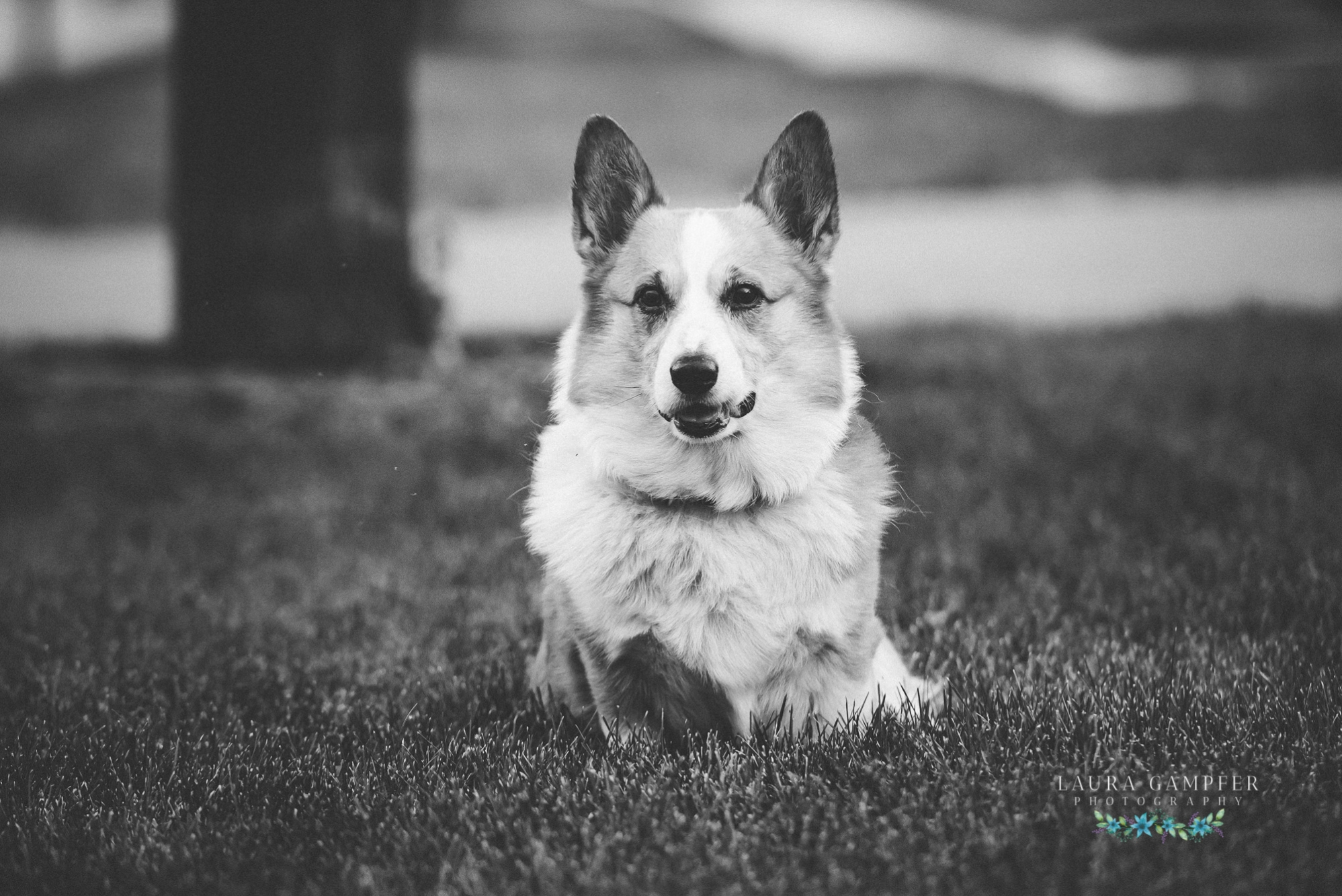 pet-photography-sugar-grove-il