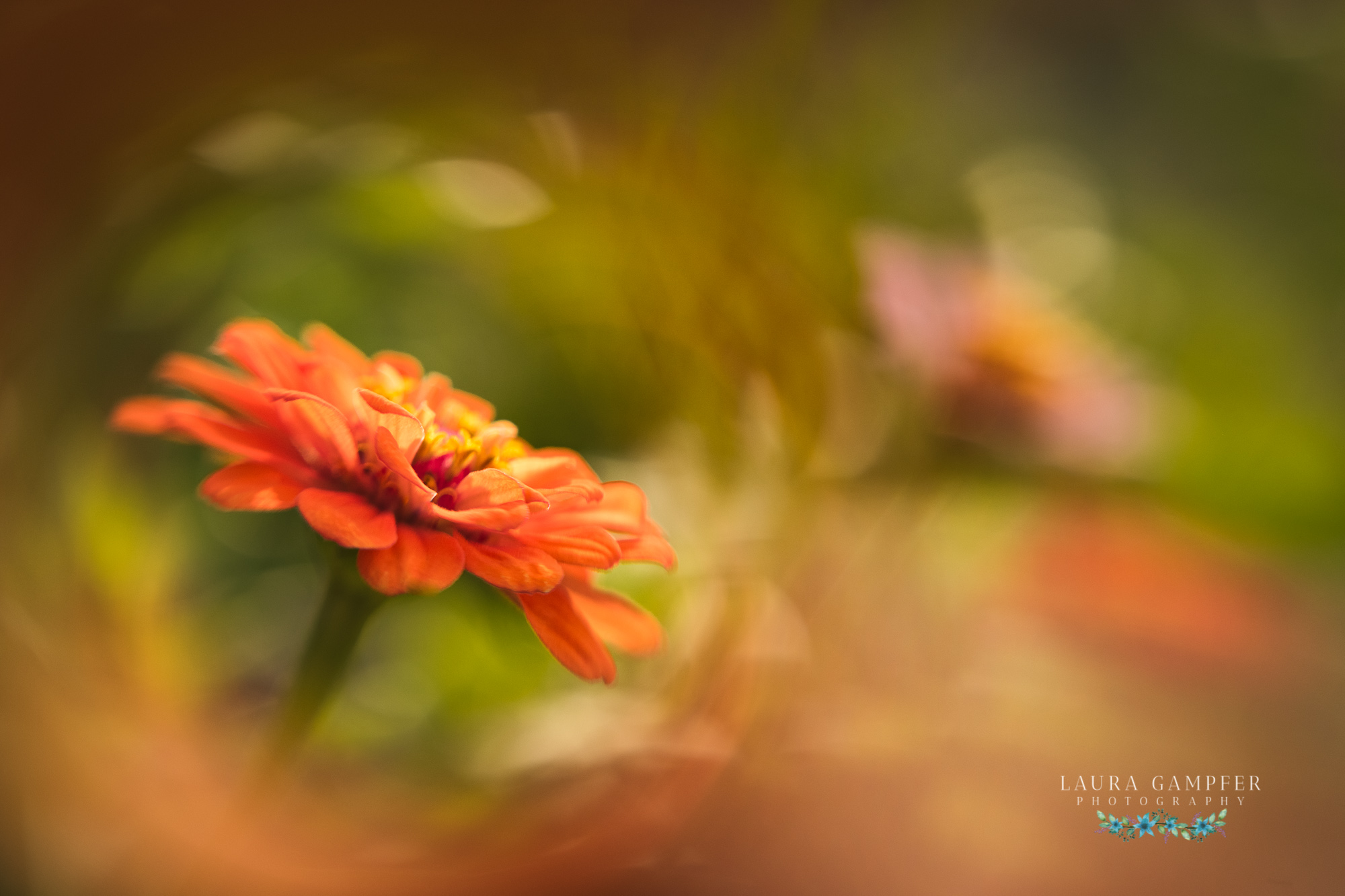 Illinois Flower Photography Laura Gampfer