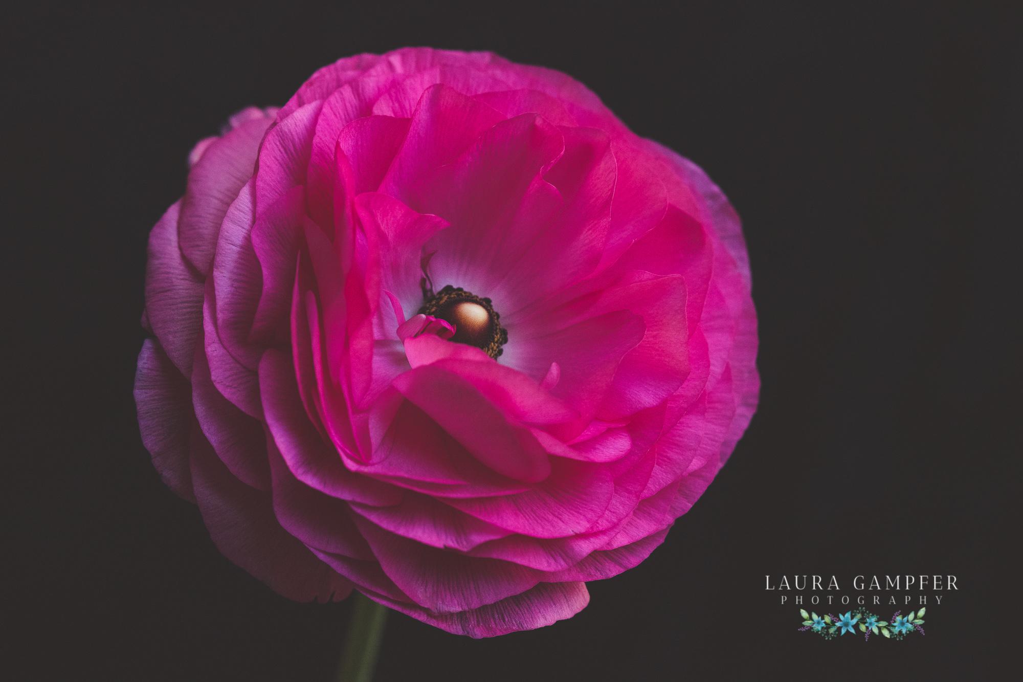 illinois-flower-photographer