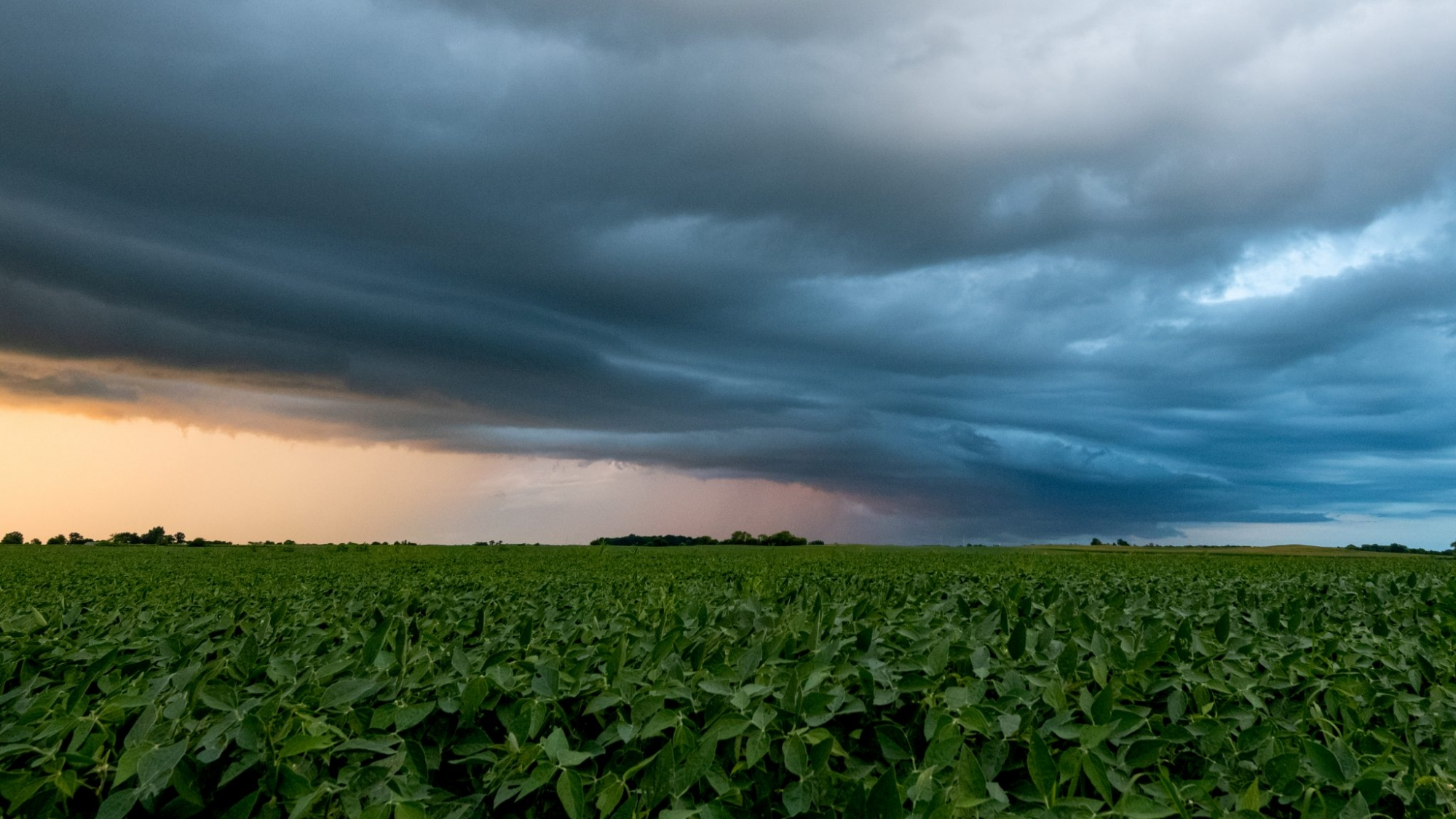 Illinois soybeans Maple Park Kane County