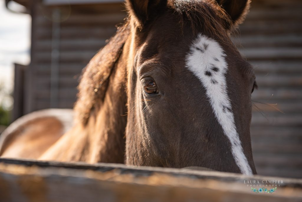 HorsePower Therapeutic Riding Fundraiser Laura Gampfer Photography